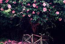 Flower Goals