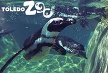 Penguins / Check out the Zoo's African Penguin exhibit--Penguin Beach!   www.toledozoo.org/penguins
