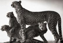 Wild / The amazing wildlife of earth.