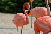 """Flamingo Key / Sponsored by Toledo Express Airport, these """"avian supermodels"""" are back at the Zoo for the first time in more than 30 years -- enjoy these beautiful birds in a fun island-inspired getaway! www.toledozoo.org"""