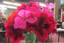 Desk Flowers / The stunning blooms we get to enjoy on our library desk