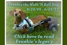 Dogs on Wheels / Blankets in Bloom will donate 20 percent of the net proceeds from the sale of waterproof blankets and crate pad covers to The Frankie WheelChair Fund, which has been helping paralyzed dogs since 2012. Donations to this fund go toward custom built wheelchairs to help provide disabled dogs a long and happy quality of life.  You can learn more about the fund and inspiring wheelie dogs at www.nationalwalknrolldogday.com and www.facebook.com/nationalwalknrolldogday