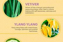 Essential Oils / Helping you find the right therapeutic oil for your needs.