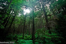 Forest Photography / Forests, trees, green places and nature in all seasons / by Megan Joel Peterson