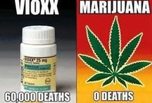 Legalize It! / Marihuana should not be a Class 1 drug. We need to recognize the medicinal value. / by Janet Cox