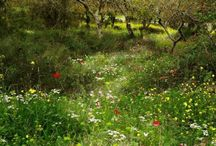 Den vilde have / Lade naturen råde mere. Ingen gift og kunstgødning. Mange hjemmehørende planter. Gode forhold for vilde dyr. Genbrug og naturlige materialer.
