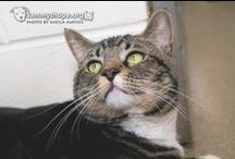 Adopt a Cat - Sammy's Hope Animal Welfare and Adoption Center / Adopt-A-Cat at Sammy's Hope!