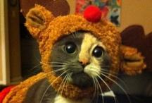 Too Cute! / by Robin Bizony
