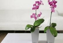 Orchids (Орхидеи) / Орхидеи - пожалуй, самые красивые цветы на свете. Они придают интерьеру какой-то особенный вкус и изящество.