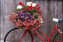 Bikes With Lovely Flowers / by Caroline DiBattista