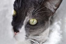 Gatos / TODO SOBRE GATOS