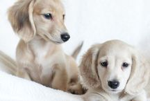 Pets 2#