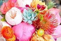 flora and fauna / by Christina Anglum