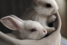 Ridiculously Cute Bunnies!