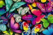 Colors / by Mara Joie Rojero