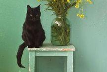 { kittens } / by Valesha Gracic (Peachy Polish)