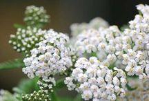 The meaning of flowers / Il significato dei fiori