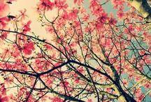 kukkavoimii