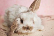 Bunnies<33