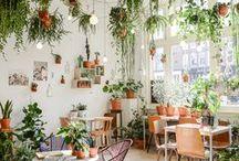 Il faut que ça pousse l Make it grow / Plantes comestibles qu'on peut faire pousser à la maison