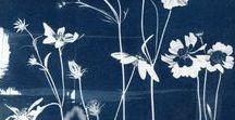 • Botanical prints and photos •