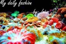 My daily fashion