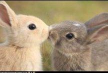 Bunnies around the world