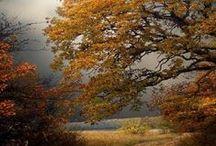 beautiful autumn / podzimní scenérie