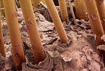 flea forest