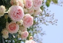 Garden - flowers / Garden plants trees flowers