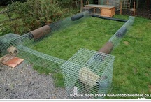 Rabbit Housing Ideas / Rabbits in the wild cover an area the size of 30 tennis courts every day, running, playing and foraging for food. Domesticated rabbits need this same amount of exercise to keep them fit and healthy, as well as keeping them entertained and their minds active! Hutches should be 6ft x 2ft x 2ft + an additional 8ft x 4ft x 4ft run /or secure area to exercise in