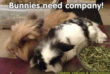 Rabbits need company / Rabbits are very sociable animals and in the wild they live in big groups. Keeping rabbits in neutered pairs gives them a happy and fulfilled life :)