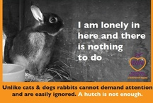 Posters & Bunny Advice / Rabbits are a 10+ year commitment and needs lots of attention, these posters help to highlight this