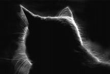 cute kitty / Kissakuvia.