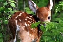 nature & animals / Luonnon ihmeitä.
