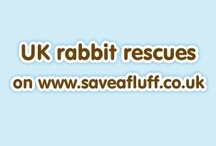 UK Rabbit Rescues / UK rabbit sanctuaries listed on our website  - adopt a rabbit 