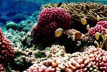 Coral  structures / Koraal structuur