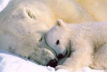 tendresse animale / by ch remy