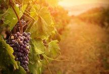 Ohio Wineries