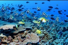 Life on a Coral Reef / Explore life on #coral reefs with some amazing #underwater #photography. This board will also highlight some posts from Corals Week.