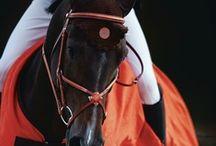 HORSE SHOW / by Julie Ballard Haralson