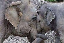 amazing animals / by Deborah Gorton