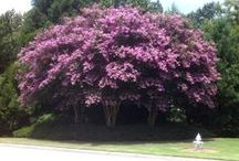 Summer in Roswell / Summer is a perfect time to get out and enjoy the natural side of Roswell.
