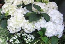 Helsinki Flowers / Flowers & plants in Helsinki