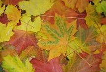 Garden & Nature Textures / Fantastic Plant Textures