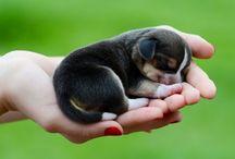 Cute things☺️ / Adorable cute sad nice / by Maggie🎀