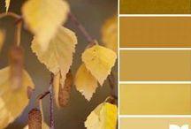 Color oak buff trend 2015/2016