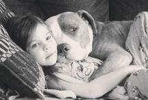 Animals love&friendship