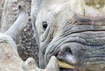Safe the rhinos