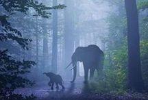 elephants & co